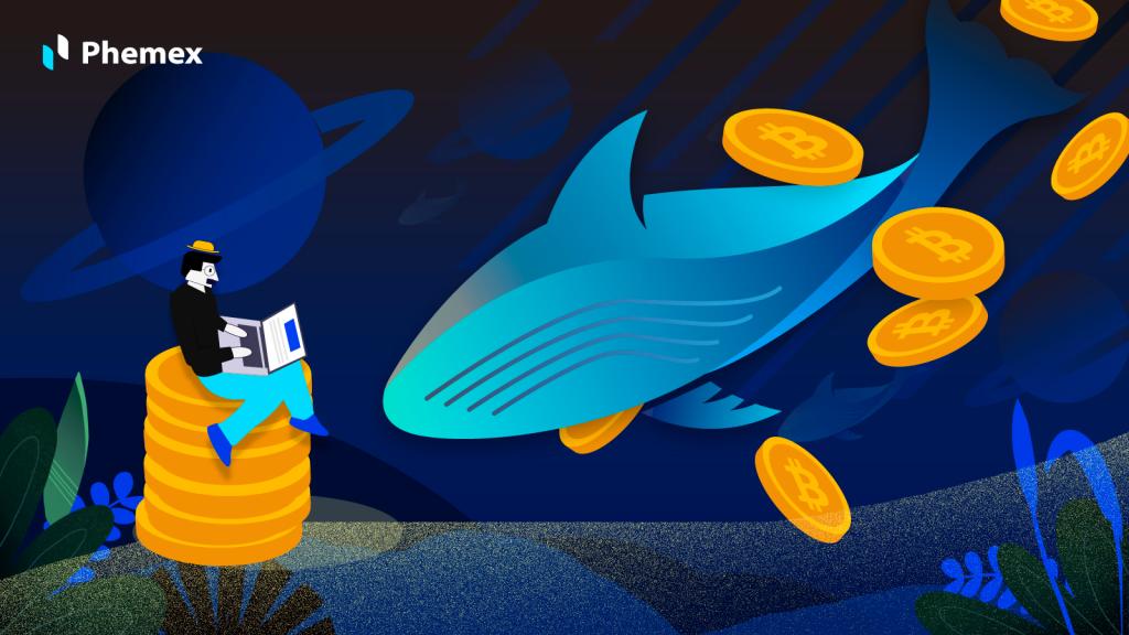 가상화폐 고래는 무엇이고 왜 중요할까?