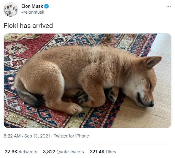 elon musk and floki